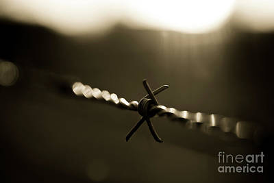 Photograph - Barbed Wire With Back Light by Giovanni Malfitano