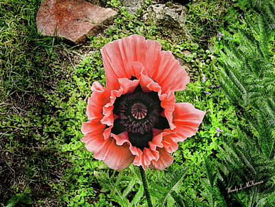 Photograph - Barb's Garden Poppy by Wendy McKennon
