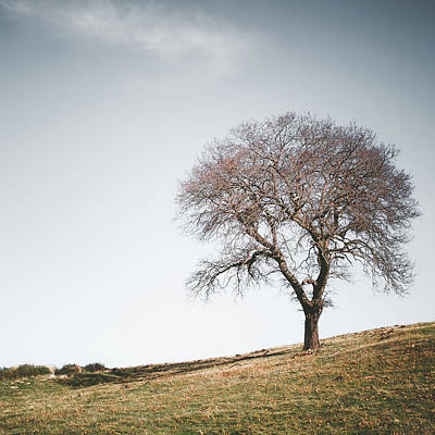 Photograph - Bare Black Oak by Alexander Kunz