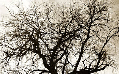 Genealogy Photograph - Bare Branches by Marilyn Hunt