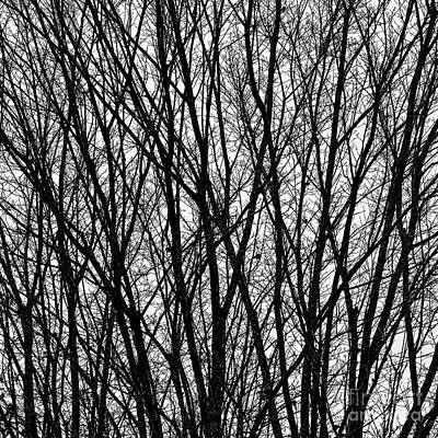 Photograph - Bare Branches by Patrick M Lynch
