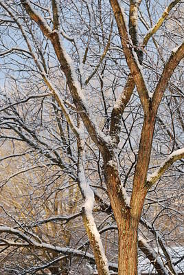 Bare Branches Art Print by Trudi Southerland