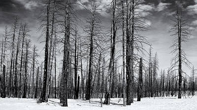 Photograph - Bare Forest by Nicholas Blackwell