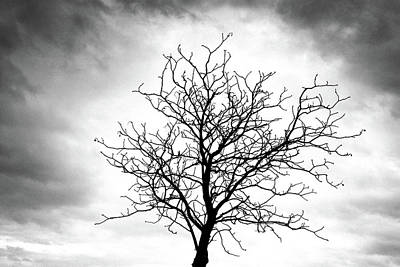 Photograph - Bare Tree Against A Cloudy Sky by Carolyn Derstine
