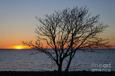 Photograph - Bare Tree At Sunset by Kennerth and Birgitta Kullman
