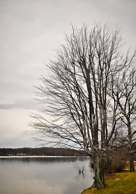 Photograph - Bare Tree At Water's Edge  by Greg Jackson