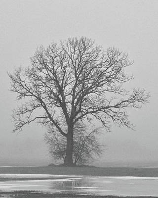 Photograph - Bare Tree In Fog by Nancy Landry