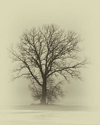 Photograph - Bare Tree In Fog- Nik Filter by Nancy Landry