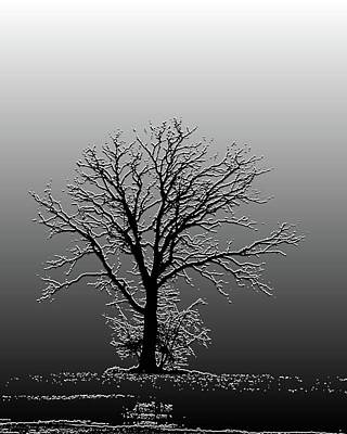 Bare Tree In Fog- Pe Filter Art Print by Nancy Landry