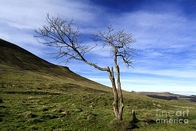 Pasture Scenes Photograph - Bare Tree In The Mountain. Auvergne. France by Bernard Jaubert