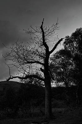 Photograph - Bare Tree by Keith Elliott
