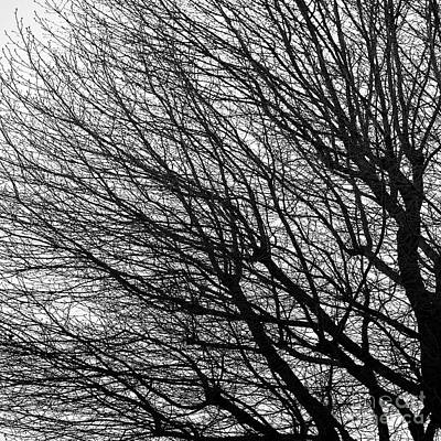 Photograph - Bare Tree Left by Patrick M Lynch