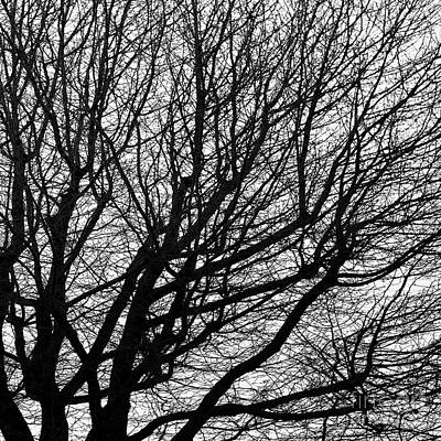 Photograph - Bare Tree Right by Patrick M Lynch