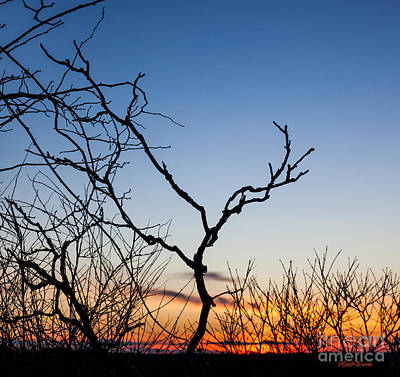 Photograph - Bare Trees At Sunset by Michelle Wiarda