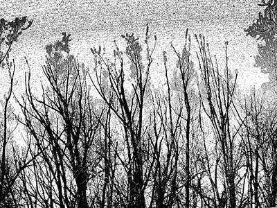 Photograph - Bare Trees by David Pantuso