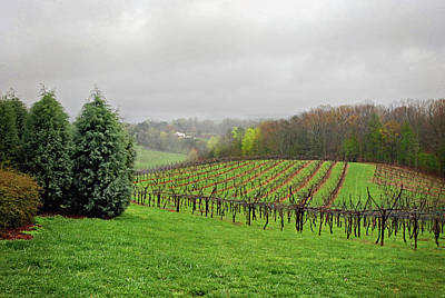 Photograph - Bare Vineyard by Robert Smith