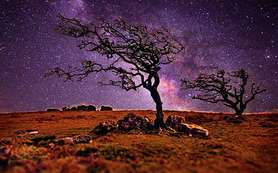 Photograph - Bare Wind Blown Trees At Night by Russ Harris