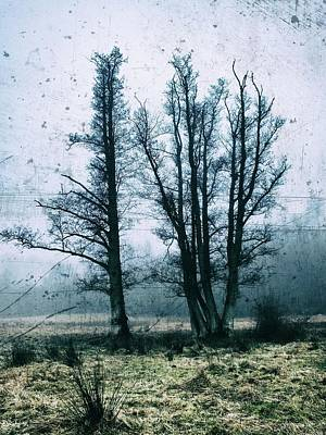 Photograph - Bare Winter Trees by Karen Stahlros