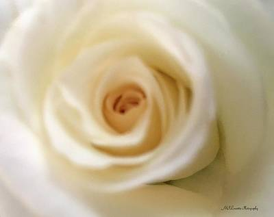Photograph - Barely White Rose by Marian Palucci-Lonzetta