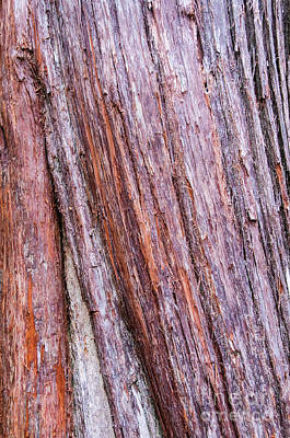 Photograph - Bark 7 by Werner Padarin