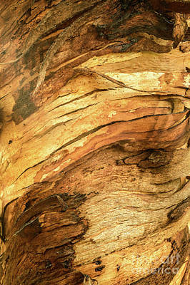 Photograph - Bark A01 by Werner Padarin