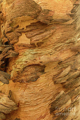 Photograph - Bark A02 by Werner Padarin