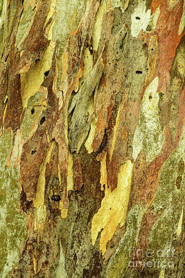 Photograph - Bark A03 by Werner Padarin