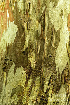 Photograph - Bark A04 by Werner Padarin