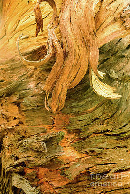 Photograph - Bark A06 by Werner Padarin