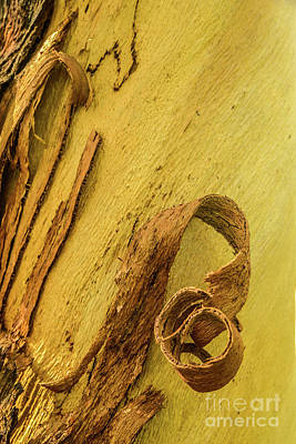 Photograph - Bark A07 by Werner Padarin