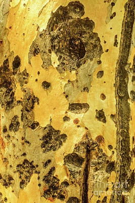 Photograph - Bark A08 by Werner Padarin