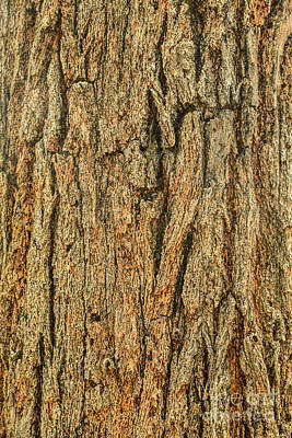 Photograph - Bark A09 by Werner Padarin