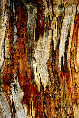 Photograph - Bark Abstract by Debbie Oppermann