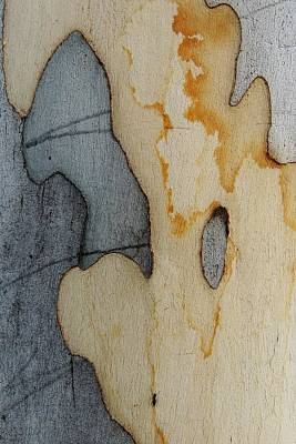 Photograph - Bark Abstract With Ant by Denise Clark