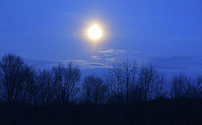 Photograph - Bark At The Moon by JAMART Photography