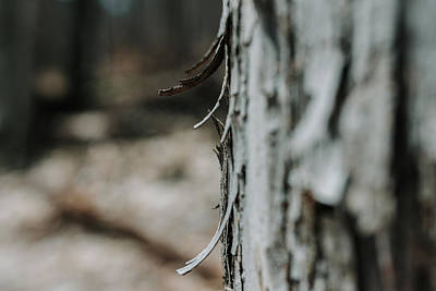 Photograph - Bark Bokeh by Valerie Rosen