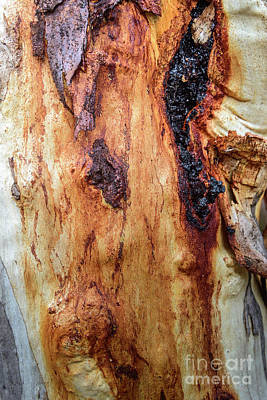 Photograph -  Bark Br01 by Werner Padarin