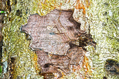 Nature Center Painting - Bark Center by Christine Dekkers