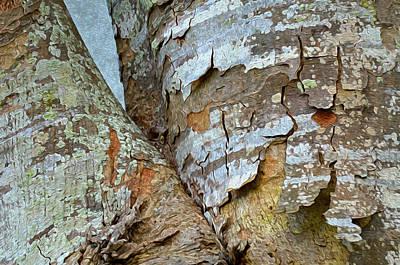 Photograph - Bark Composition 9 by Lynda Lehmann