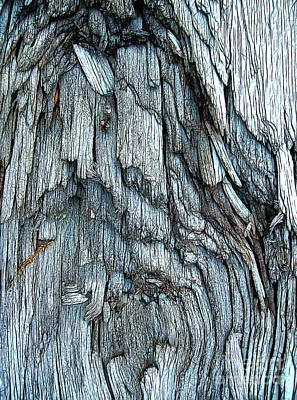Photograph - Bark Detail by Judi Bagwell