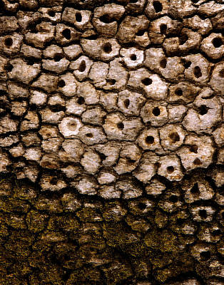 Photograph - Bark Essentials  by Gary Brandes