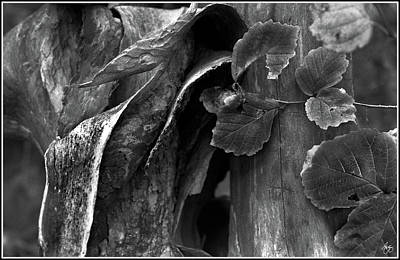 Photograph - Bark Forms And Witch Hazel by Wayne King