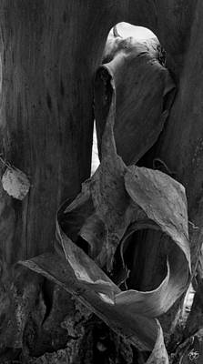 Photograph - Bark Forms On Stinson Brook by Wayne King