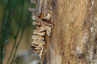 Bark Fungus On Tree Trunk Art Print