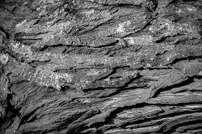 Photograph - Bark #g9 by Leif Sohlman
