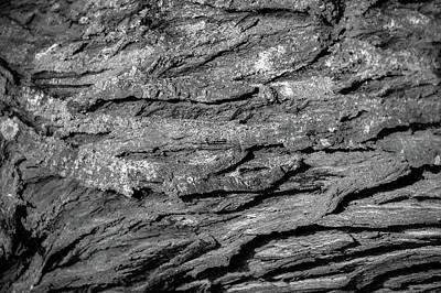 Photograph - Bark #g9 by Leif Sohlman