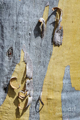 Photograph - Bark Gd4 by Werner Padarin