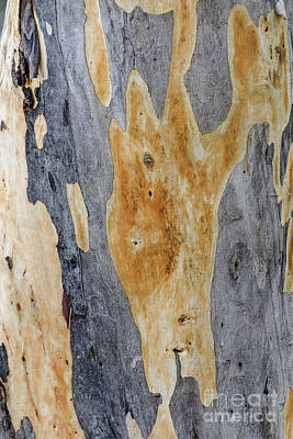 Photograph - Bark Gd5 by Werner Padarin