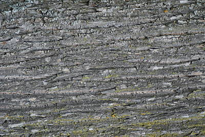 Photograph - Bark In The Woods by Ron Read