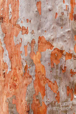 Photograph - Bark Kc04 by Werner Padarin